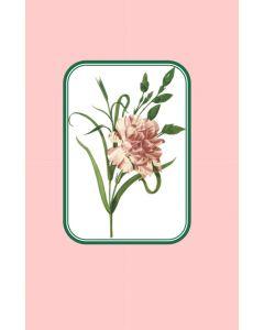 Oversize Notecard Carnation
