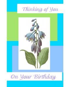 Birthday Card for Anyone